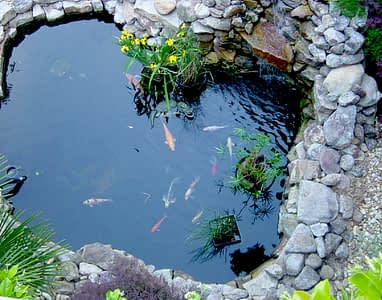 рыбки в пруду на даче2