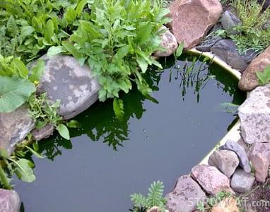 пруд-из-ванны (5)