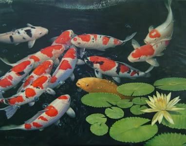 рыбки в пруду на даче3